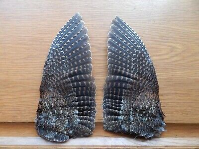 £18 • Buy Pair Dried Woodcock Wings   Bird Wings Fly Tying Crafts Taxidermy