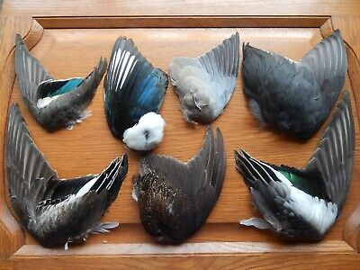 £13.59 • Buy Mixed Dried Wings Bird Wings Fly Tying Arts Crafts Feathers