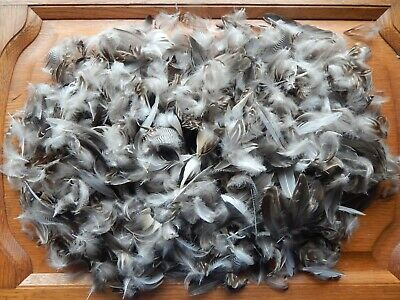 £5.49 • Buy 200+ Mixed Teal Duck Feathers Bird Wings Fly Tying Arts Crafts