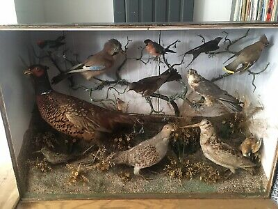 £950 • Buy Stunning Large Victorian Case Of 12 Taxidermy Birds & Butterfly