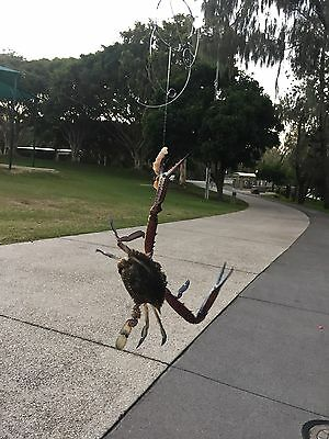 AU6.99 • Buy 2x Castable  Crab Snare Trap Survival Gear Tools High Quality Well Made