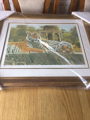 """£15 • Buy New Stephen Gayford Print Of Tigers """"Temple Tigers Limited Edition No 983 / 1250"""
