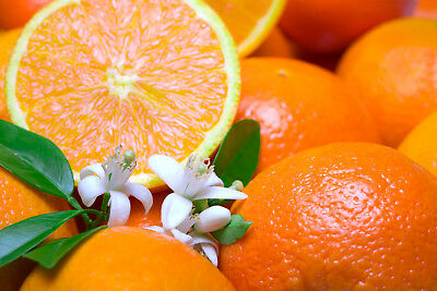 $5.65 • Buy CITRUS TREE (COMPARE TO ORANGE BLOSSOM®) Soap / Candle Fragrance Oil 1-16 Ounce