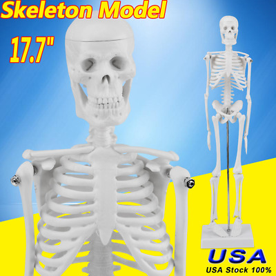 $7.89 • Buy 17.7  Teach Human Anatomical Anatomy Skeleton Model W/ STAND For Doctor/Student