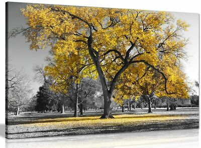Large Tree Yellow Leaves Black White Nature Canvas Wall Art Picture Print • 34.99£