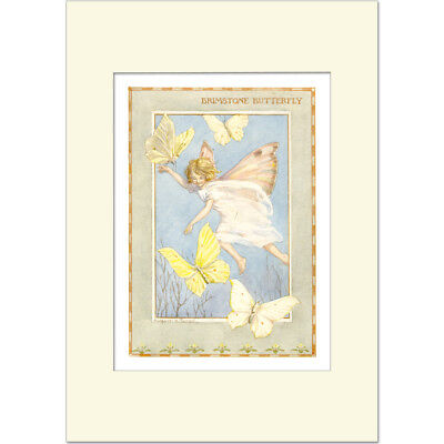 Brimstone Butterfly - Margaret Tarrant - Medici Mounted Print • 21£