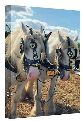 Canvas Wall Art Print Of Two Large Working White Shire Horses Picture Poster • 14.99£