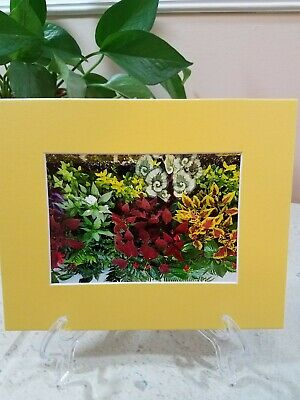 Original Color Print Photograph Matted Yellow Window Garden Home Decor 8 X 10 • 15.36£
