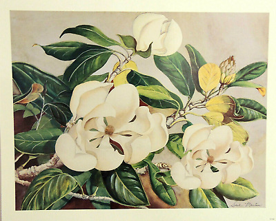 $16.95 • Buy Magnolia Flower Picture Floral Still Life  Print 16x20