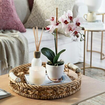 AU119.95 • Buy New MUSE Potted White Large Phalaenopsis Orchid