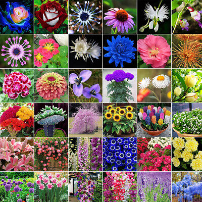 $1.47 • Buy 1-20000Pcs Rare Mixed Style Rose Flower Seeds Home Garden Bonsai Plants Decor