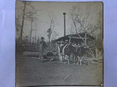 $19.99 • Buy RPPC Real Photo Postcard Loggers Lumber  Mill Team Of Cows