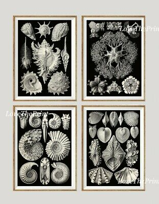 $23.99 • Buy Unframed Sea Shells Print Set Of 4 Antique Black And White Home Wall Art Decor