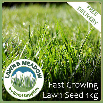 £9.99 • Buy 1kg Lawn Grass Seed Fast Growing - RAPID QUICK GROWTH NEW LAWNS PATCH & REPAIR