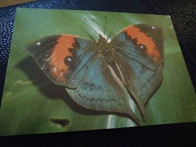 Vintage Postcard The Leaf Butterfly UNPOSTED  • 0.99£
