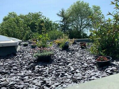 £145 • Buy PLUM SLATE CHIPPINGS 40mm.DECORATIVE STONE AGGREGATES