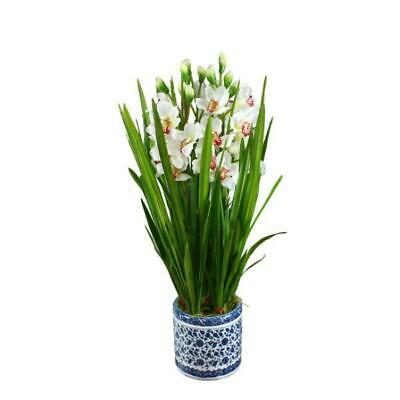 AU239 • Buy Real Touch Phalaenopsis Cymb Orchids In Dynasty Pot 87 Cm