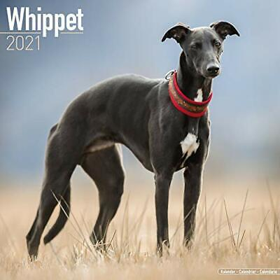 Whippet 2021 New Calendar Book • 7.72£