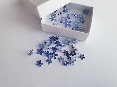 30 Pcs Forget Me Not Dried Flowers (NOT PRESSED) For Resin • 12£