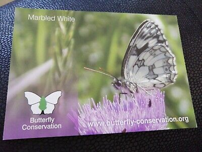 Postcard Marbled White Butterfly  • 0.99£