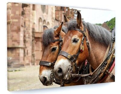Stunning Shire Horse Canvas Picture Print Wall Art Chunky Frame Large 954-2 • 39.88£
