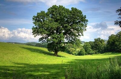 Countryside Woodland Trees Path Canvas Picture Poster Print Unframed #2085 • 15.46£