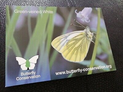 Postcard Green Veined White Butterfly  • 0.99£