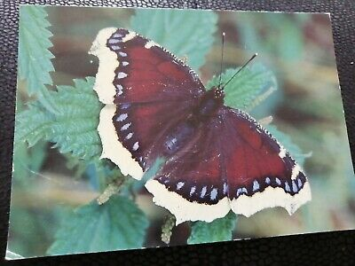 Postcard Camberwell Beautiful Butterfly  • 0.99£