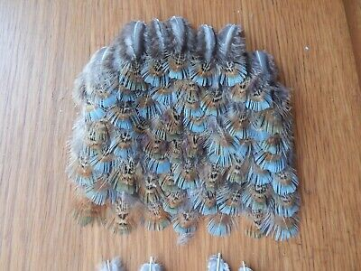 50+ Part Melanistic Cock Pheasant  Back Feathers Bird Wings Fly Tying  • 3.99£