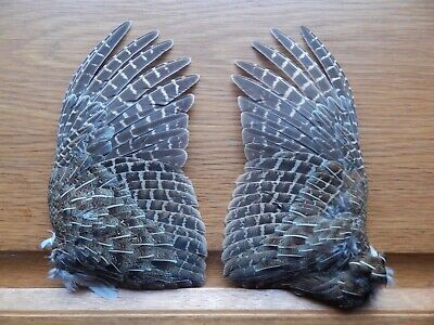 Pair Dried English Partridge Wings Bird Wings Fly Tying Crafts Taxidermy • 11£