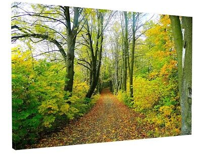 £27.98 • Buy Woodland Forest Trees Path Canvas Picture Print Wall Art 1359