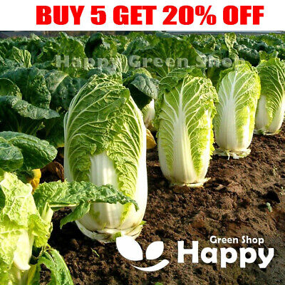 £1.10 • Buy VEGETABLE - CHINESE CABBAGE - HILTON - 400 Seeds - Selected Seeds Brassica Rapa