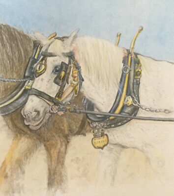 Zebedee - Shire Horse Picture Mounted And Glazed Picture In Wooden Frame • 90£