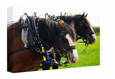 Stunning Shire Horse Faces Canvas Print Wall Art Picture Framed Ready To Hang • 14.99£