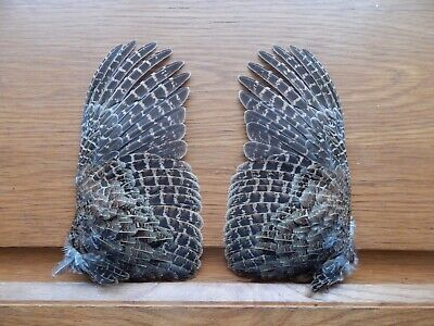 £11 • Buy Pair Dried English Partridge Wings Bird Wings Fly Tying Crafts Taxidermy