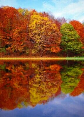 Autumn Trees Canvas Wall Art Picture Print Living Room Home Decor • 8.99£