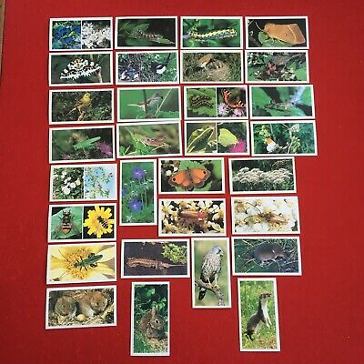 £3.50 • Buy Player's (grandee) Britain's Wayside Wildlife Complete Set Of 30 Cigarette Cards