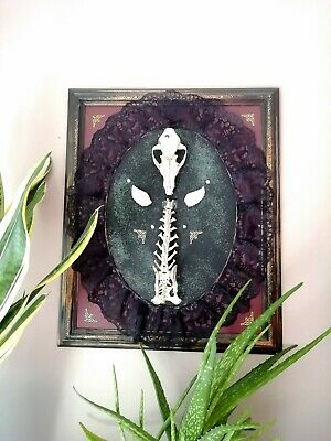 Ooak Gothic Art Taxidermy Wall Mount Skull Bones Picture Frame Fox • 99.99£