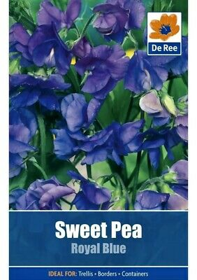 £0.99 • Buy SWEET PEA SEEDS Royal Blue 15 FLOWER Garden Borders Containers Plants