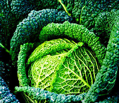 £0.99 • Buy Vegetable Savoy Cabbage Winter King Appx 750 Seeds