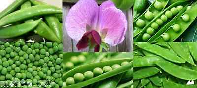 AU2 • Buy PEA Heirloom Mix 20+ Seeds Snow Snap Mixed WINTER Vegetable Garden EASY TO GROW