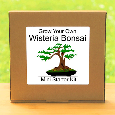 £4.99 • Buy Grow Your Own Chinese Wisteria Bonsai Tree Seeds Kit - Indoor Gardening Gift
