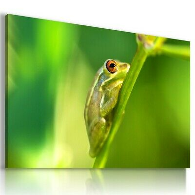 £18.99 • Buy Holarctic Tree Frogs Animals Canvas Wall Art Picture   AN320 UNFRAMED-ROLLED