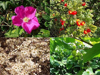 45 Mixed Native Wildlife Hedging Plants For 5 M / 16ft,8 Native Varieties • 29.99£