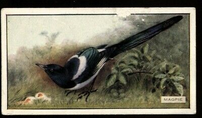 $2.80 • Buy Tobacco Card, Scottish CWS, FEATHERED FAVOURITES, Adhesive, 1926, Magpie, #15
