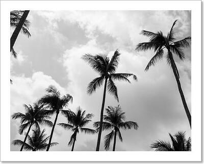 $19.95 • Buy Palm Trees (Black And White) Art Print Home Decor Wall Art Poster