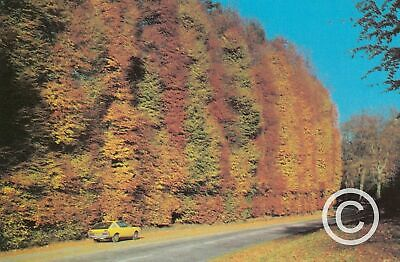 £2.49 • Buy The Beech Hedges Near Blairgowrie Planted 1746, Perthshire Postcard Scotland