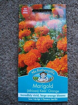 ⭐⭐⭐⭐⭐ Mr Fothergills Flower Seeds Marigold African Kees Orange • 3£