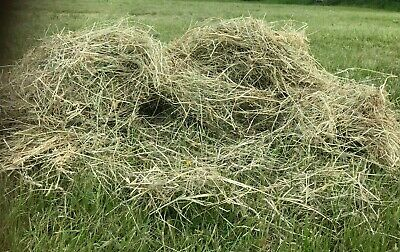 £5.30 • Buy Top Quality Fresh Meadow Hay 1KG, Suitable For Rabbits And Guinea Pigs