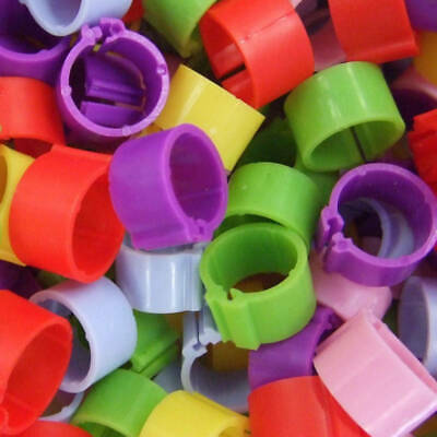 Pack Of 20 X 16mm Chicken Poultry Flat Leg Rings In Mixed Colours - Free Postage • 5.99£